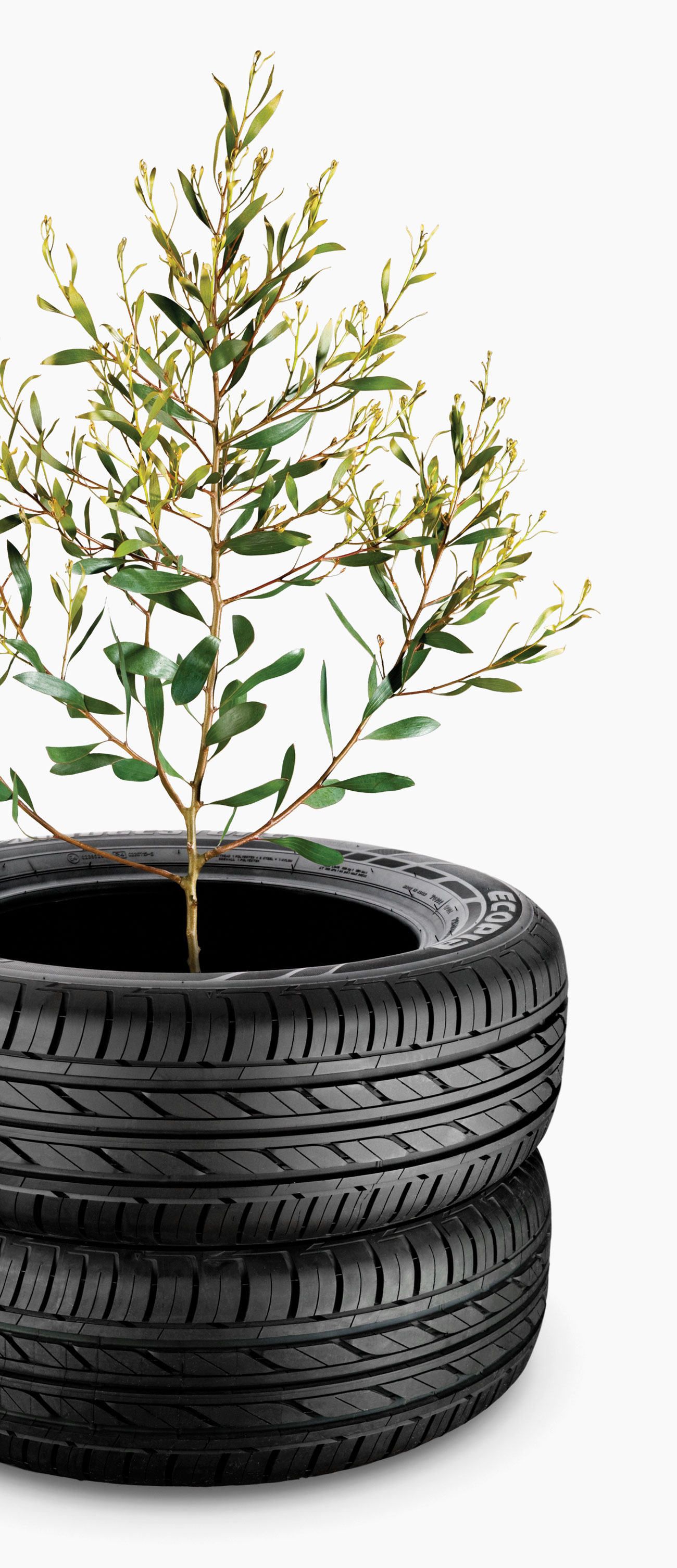 bridgestone-ecopia-tree