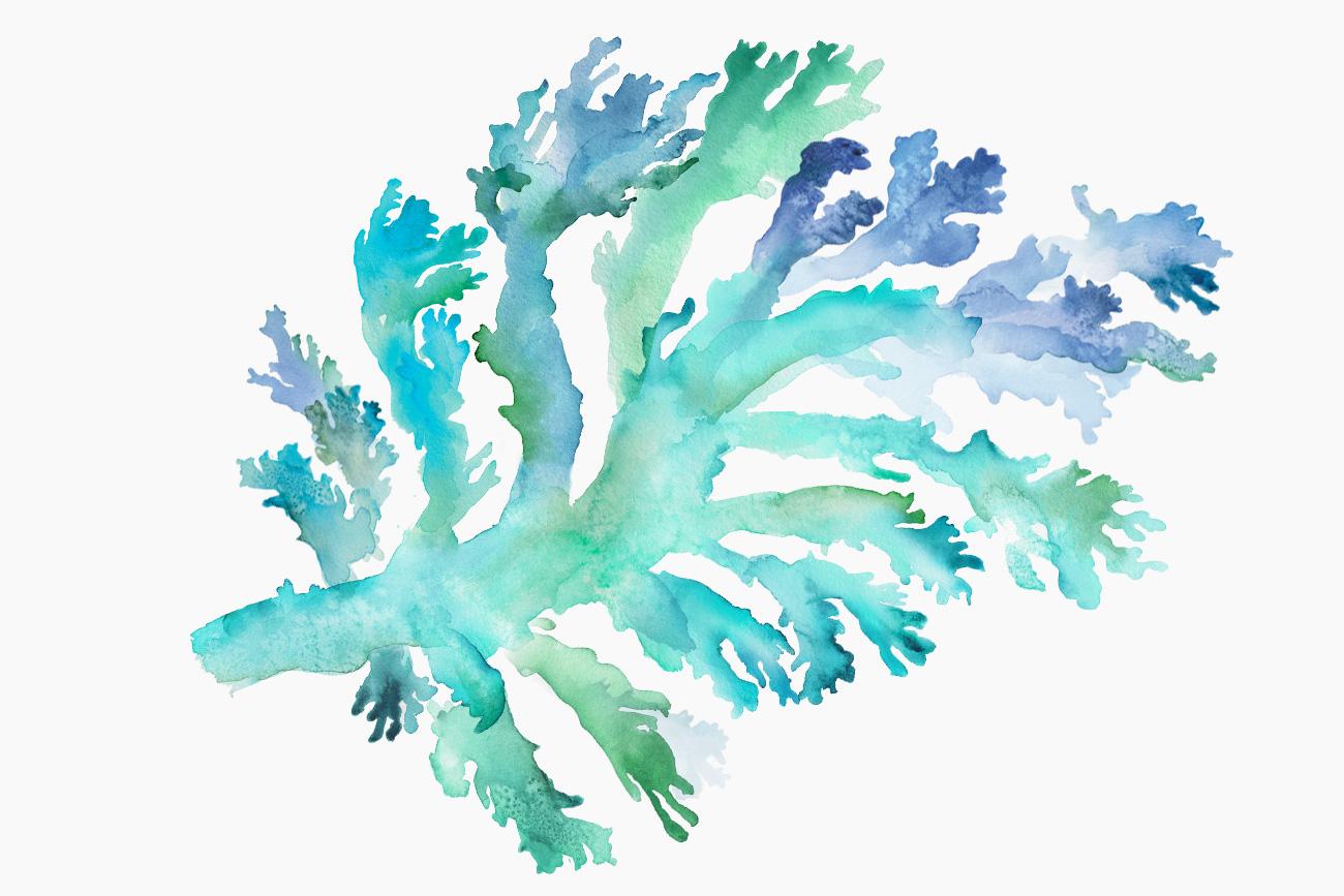 wow-fish-watercolour-3